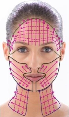 Schéma du relâchement du visage